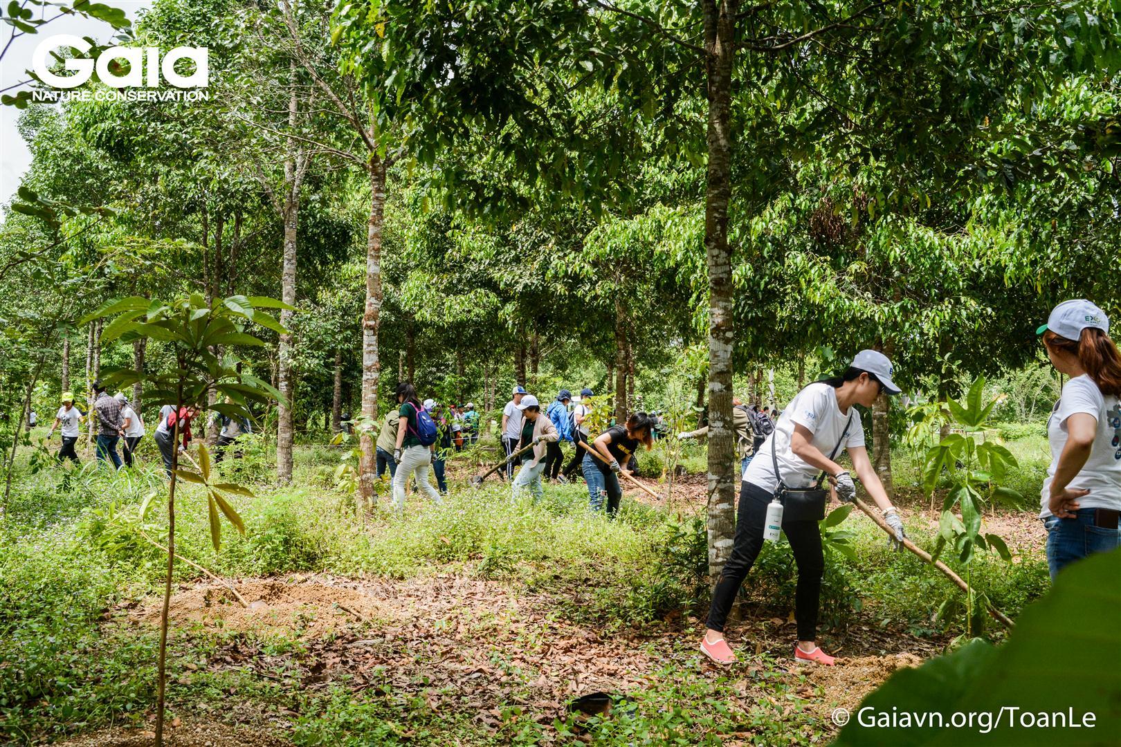 Trồng cây làm giàu cho khu rừng