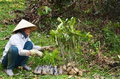 Kiểm tra số lượng cây trước khi trồng.