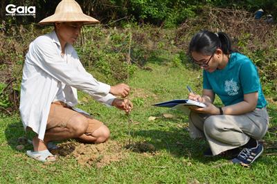 Gaia nghiệm thu, giám sát khu rừng trồng tại Xuân Liên