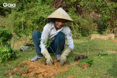 Một người dân tộc Thái đang trồng rừng tại Khu Bảo tồn Thiên nhiên Xuân Liên