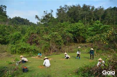 Khu vực trồng rừng trên đất trống tại Khu Bảo tồn Thiên nhiên Xuân Liên