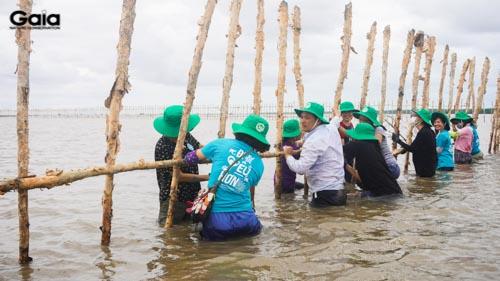 Dự án giúp tăng diện tích rừng ngập mặn, ứng phó tốt hơn với biến đối khí hậu và phòng chống xâm nhập mặn.