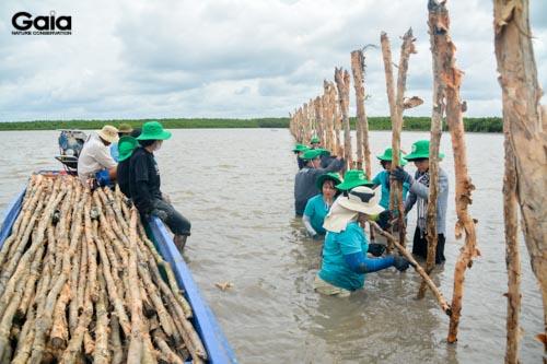 Hào hứng làm hàng rào gây trồng rừng ngập mặn